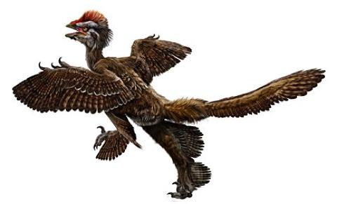 Feathered Ancestor
