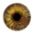 Artists Rankin Portfolio Specialprojects Images Eye-Scapes---03
