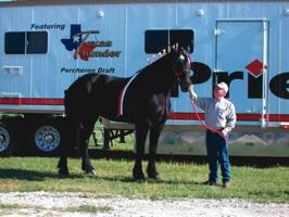 Texasthunder Images Hi-B012