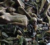 Holocaustfloattt