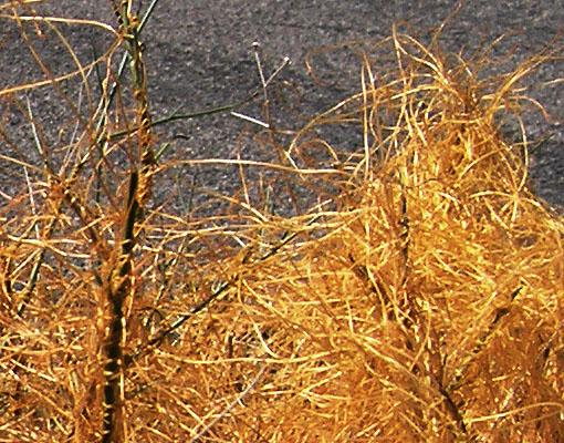 Orange vegetation - 2