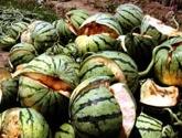 Watermeloexp