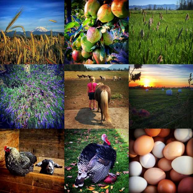 Photos from the Boise Creek Boers Instagram feed