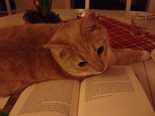 Katt och bok