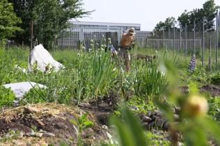Der BOKU-Gemeinschaftsgarten im Mai