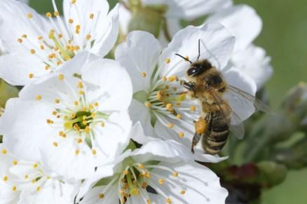 Unsere Bienen sind am Werk