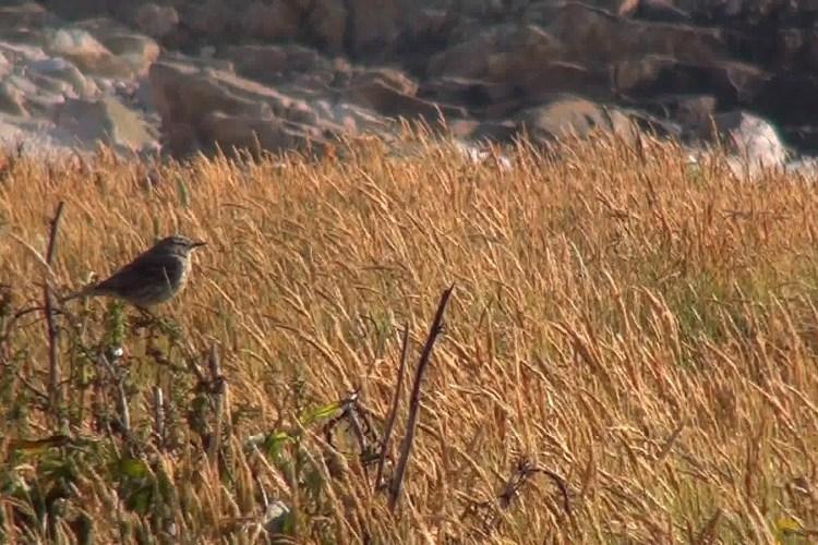 Haïku #63 : Dix grammes d'oiseau