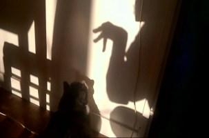 Haïscope #1989 : Le chat étonné