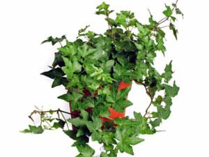 19 air purify plants 191011