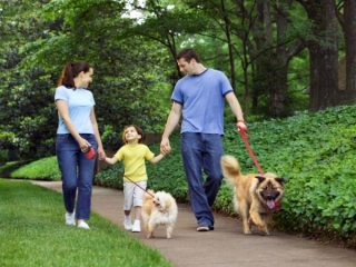 Healthy Foods For Healthy Family
