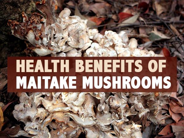 Health Benefits Of Maitake Mushrooms