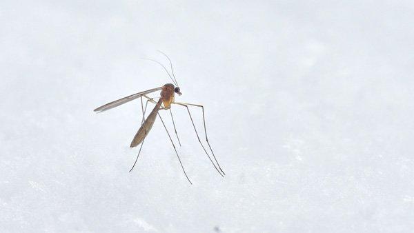 डेंगू के खिलाफ उपाय करें, सरकार