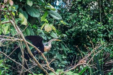 Ecuador Amazon (2 of 91) May 15