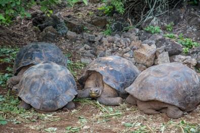 Galapagos - Tortuga Bay + Turtle Reserve (11 of 58) June 15