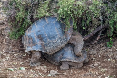 Galapagos - Tortuga Bay + Turtle Reserve (12 of 58) June 15