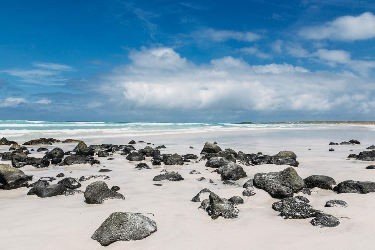 Galapagos - Tortuga Bay + Turtle Reserve (21 of 58) June 15