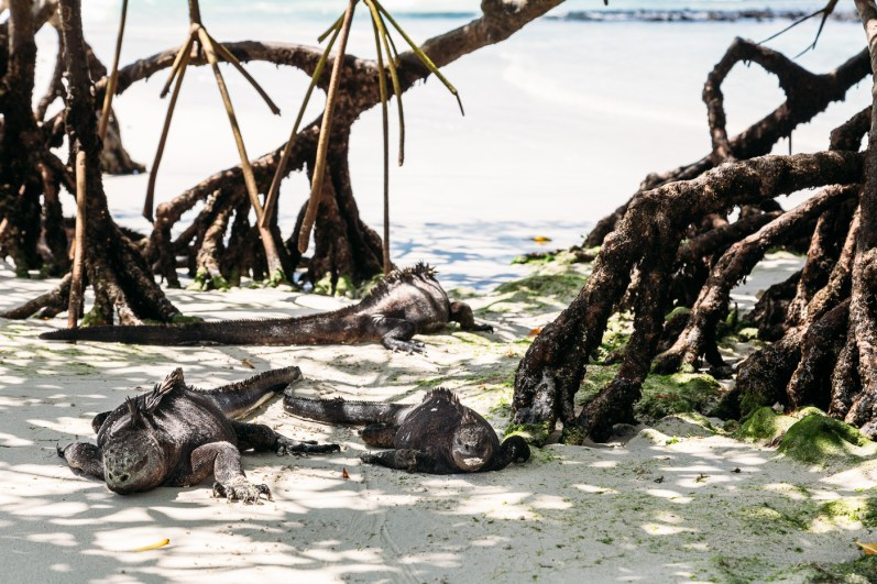 Galapagos - Tortuga Bay + Turtle Reserve (29 of 58) June 15