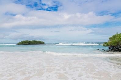 Galapagos - Tortuga Bay + Turtle Reserve (45 of 58) June 15
