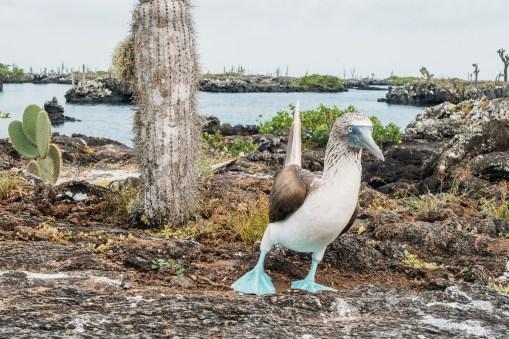 Galapagos - Los Tuneles (31 of 71) June 15