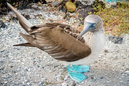 Galapagos - Los Tuneles (43 of 71) June 15