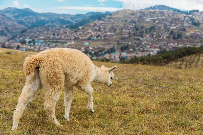 Saksaywaman Cusco Peru -32- July 2015