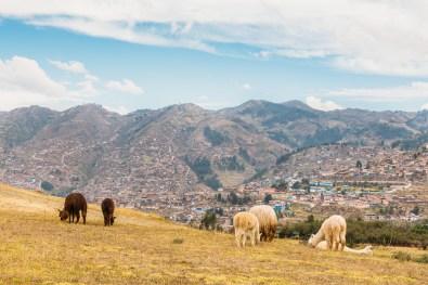 Saksaywaman Cusco Peru -40- July 2015