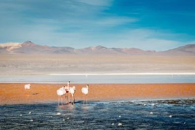 Salar de Uyuni - Bolivia -117- July 2015