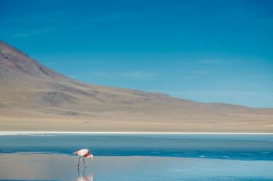 Salar de Uyuni - Bolivia -82- July 2015
