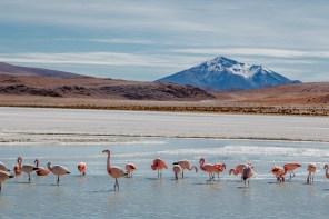 Salar de Uyuni - Bolivia -86- July 2015