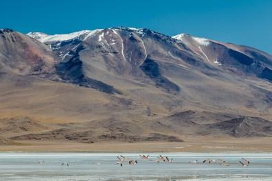 Salar de Uyuni - Bolivia -92- July 2015