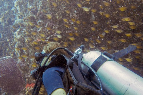 Koh Haa - Koh Lanta Diving -113