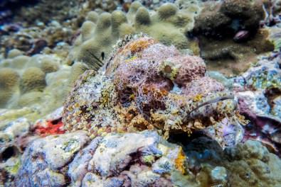 Koh Haa - Koh Lanta Diving -135