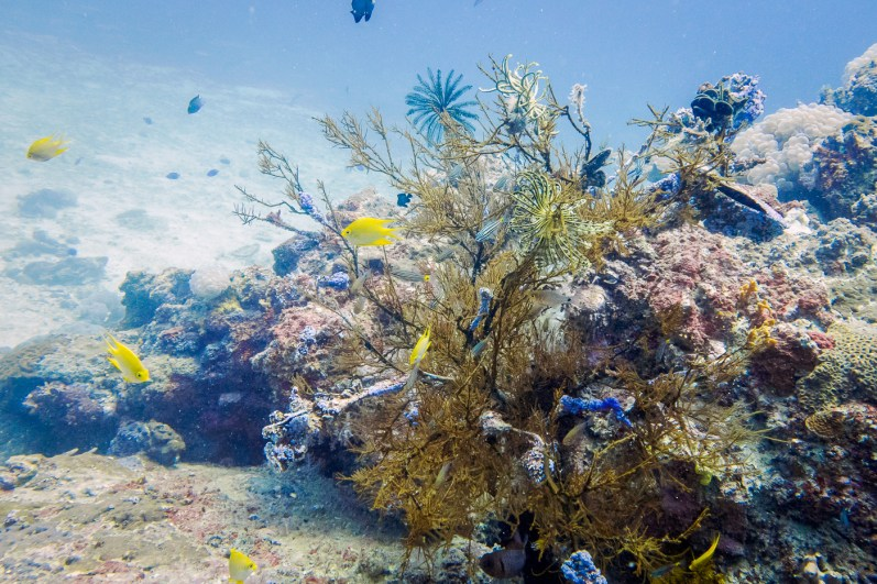 Beautiful corals at Koh Haa - Koh Lanta Diving