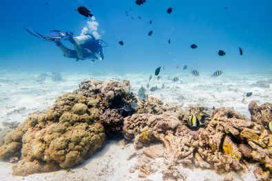 Koh Haa - Koh Lanta Diving -34