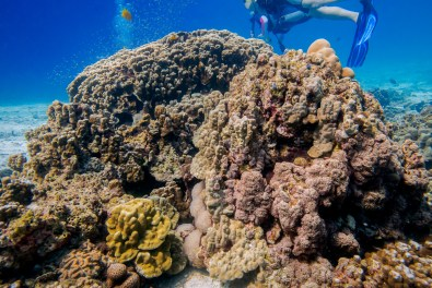 Koh Haa - Koh Lanta Diving