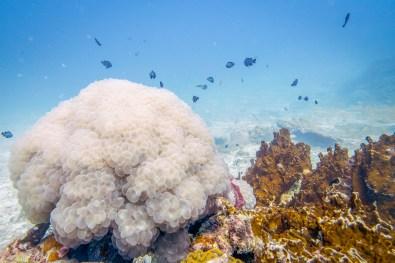 Corals and fish of Koh Haa near Koh Lanta