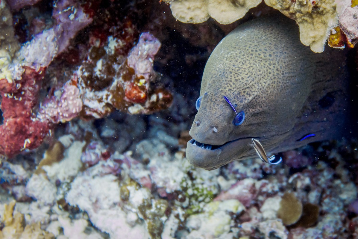 A moray eel from the Similan Islands