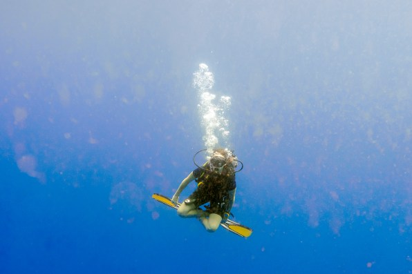 Similan Islands Live Aboard with Wicked Diving -222