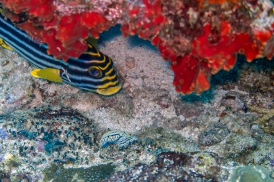 Similan Islands Live Aboard with Wicked Diving -7