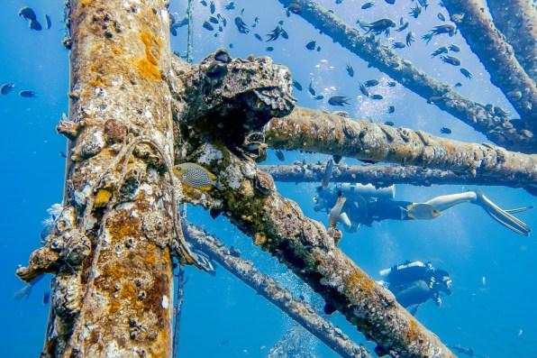 Diving Koh Kood - HTMS Chang Shipwreck