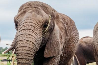 Elephant Park Knysna -16