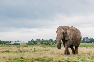 Elephant Park Knysna -30