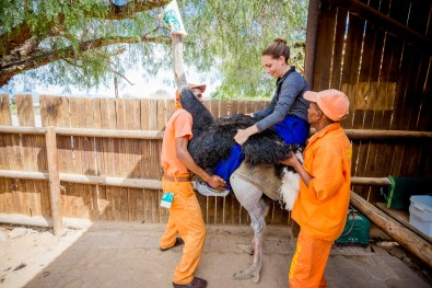 Safari Ostrich Show Farm Oudtshoorn -24