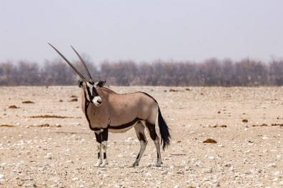 Etosha Game Reserve Self Drive Namibia -175
