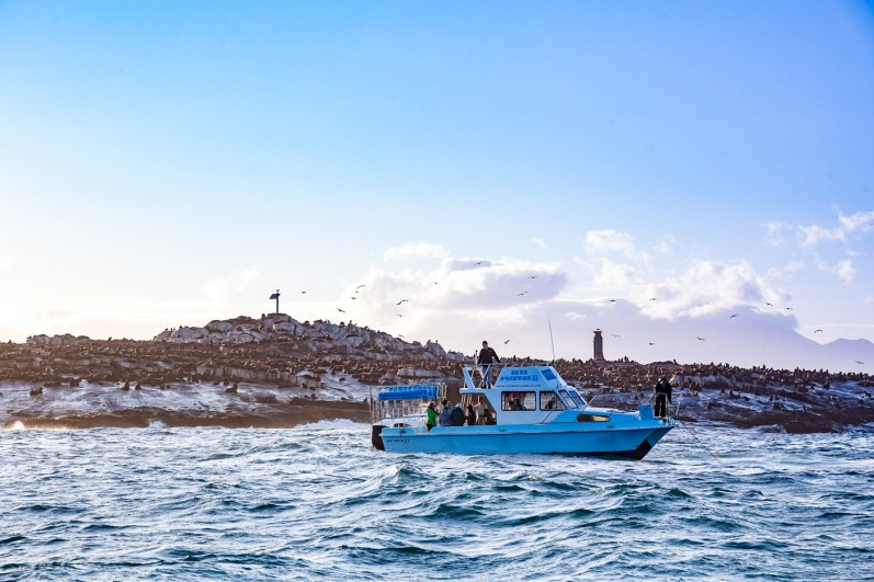False Bay Shark Diving -19