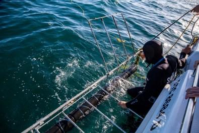 False Bay Shark Diving -35