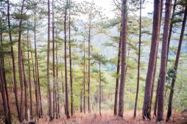 Dalat Canyoning Adventure -57