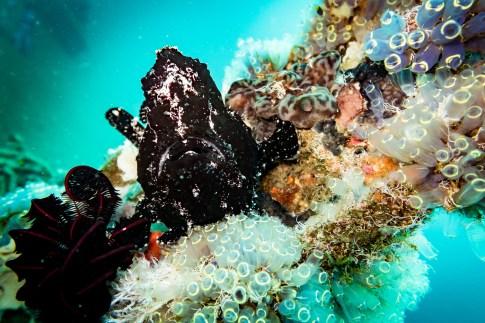 Dauin Philippines Muck Diving Site Photos -17