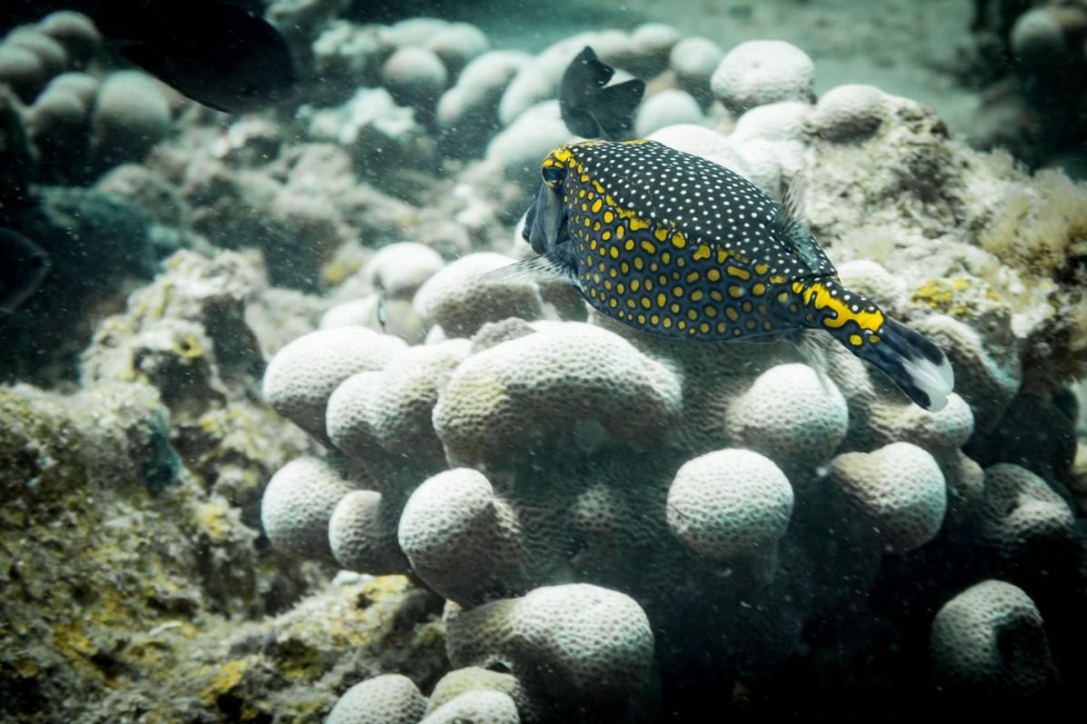 Dauin Philippines Muck Diving Site Photos -64
