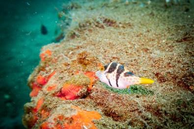 Dauin Philippines Muck Diving Site Photos -8